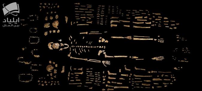 موزه بازسازی موجودات فسیلی