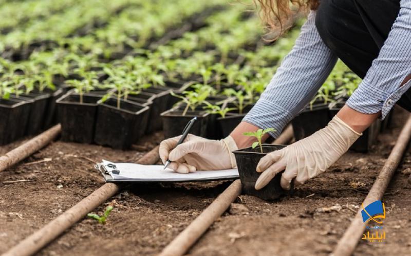 اقتصاد کشور استرالیا به دلیل برخورداری از زمین های بسیار مرغوب به کشاورزی وابسته است. بنابراین به این رشته در دانشگاههای این کشور اهمیت بسیار زیادی داده میشود.