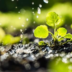 برترین دانشگاههای جهان برای تحصیل در رشتهی محیط زیست کدامند؟